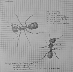 ants conferenec sketch