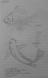fish conference sketch
