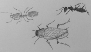 A sketch of two ants and a cockroach.