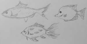 A sketch of three fishes, another possible animal that can be used.